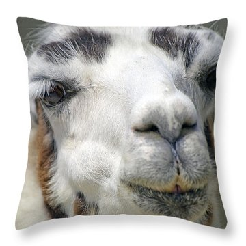 Smug Llama Throw Pillow by Kenneth Albin