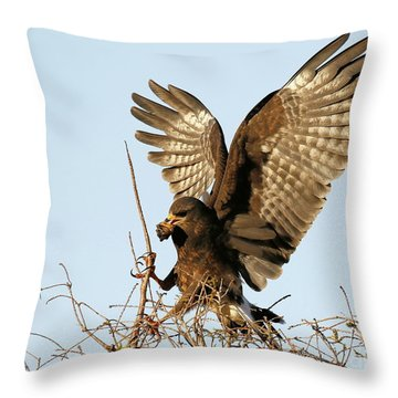 Snail Kite Coming In Throw Pillow