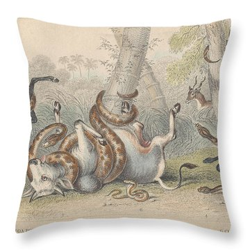 Snakes Throw Pillow by Dreyer Wildlife Print Collections