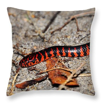 Throw Pillow featuring the photograph Snazzy Snake by Al Powell Photography USA