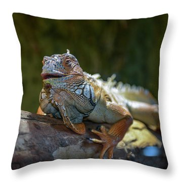 Snoozing Iguana Throw Pillow