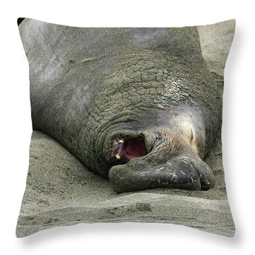 Snoring Elephant Seal Throw Pillow