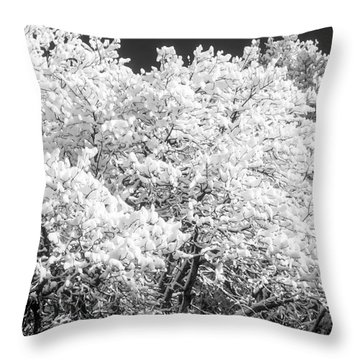 Snow And Frost On Trees In Winter Throw Pillow