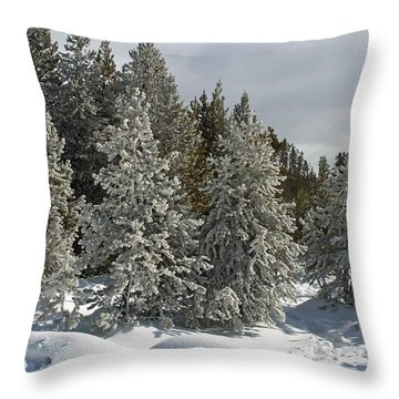 Snow And Ice Covered Evergreens At Sunset Lake  Throw Pillow