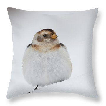 Throw Pillow featuring the photograph Snow Bunting - Scottish Highlands by Karen Van Der Zijden