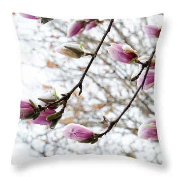 Snow Capped Magnolia Tree Blossoms 2 Throw Pillow by Andee Design