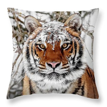 Snow Capped Siberian Throw Pillow