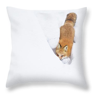 Throw Pillow featuring the photograph Snow-diving Fox  by Mircea Costina Photography