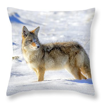 Snow Dog Throw Pillow by Aaron Whittemore