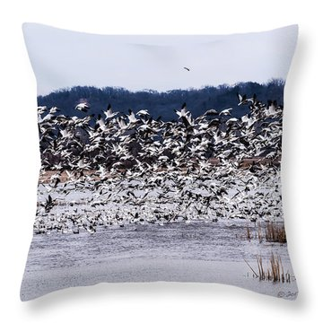 Snow Geese At Squaw Creek Throw Pillow by Edward Peterson