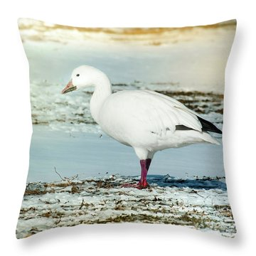 Throw Pillow featuring the photograph Snow Goose - Frozen Field by Robert Frederick