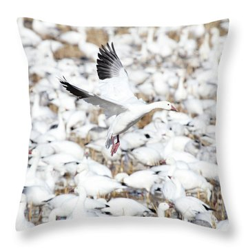 Snow Goose Lift-off Throw Pillow