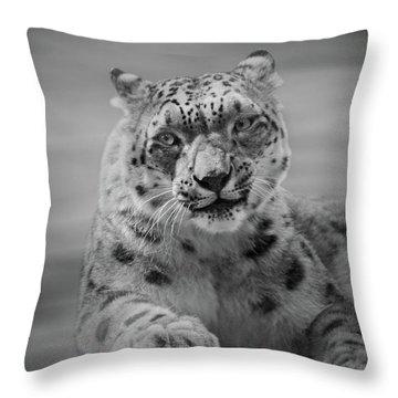 Snow Leopard  Bw Throw Pillow