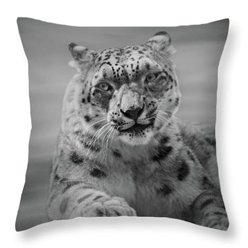 Snow Leopard  Bw Throw Pillow