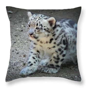 Snow Leopard Cub Throw Pillow by Terry DeLuco