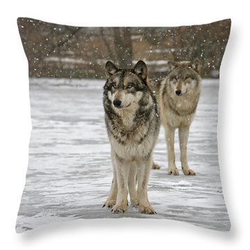 Throw Pillow featuring the photograph Snow Mates by Shari Jardina