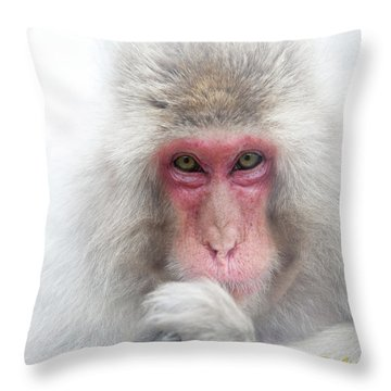 Throw Pillow featuring the photograph Snow Monkey Consideration by Rikk Flohr