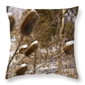 Snow On The Seed Cones Throw Pillow