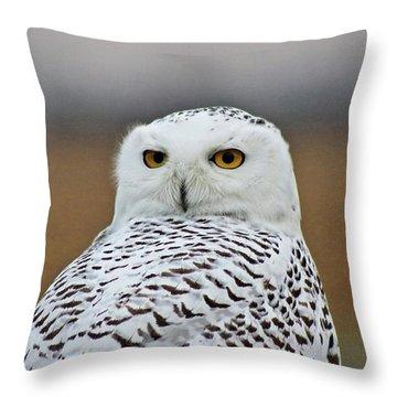 Snow Owl Strare Throw Pillow