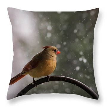 Throw Pillow featuring the photograph Snow Showers Female Northern Cardinal by Terry DeLuco