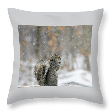 Snow Squirrel Throw Pillow by Diane Giurco