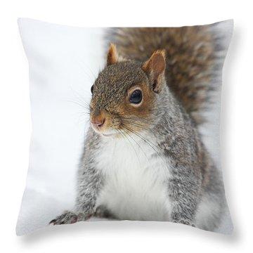 Snow Squirrel Throw Pillow by Karol Livote