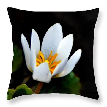 Snow White Petals Throw Pillow by Kathleen Stephens