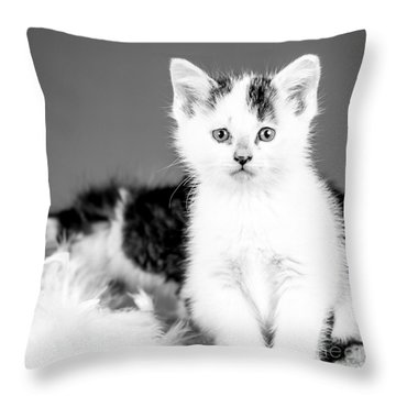 Snowball Bw Throw Pillow by Lawrence Burry