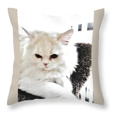 Snowball Is 92 Year Old Widows Cat Throw Pillow by Marsha Heiken