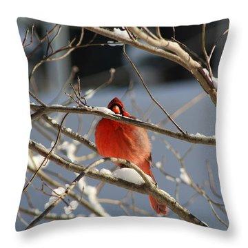 Snowbird Throw Pillow