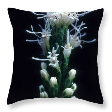 Snowflake Flower Throw Pillow by Laurie Paci