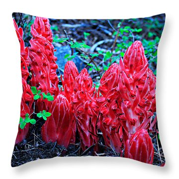 Snowflower Pow Wow Throw Pillow