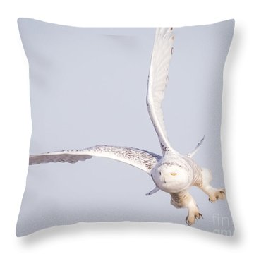 Snowy Owl Flying Dirty Throw Pillow