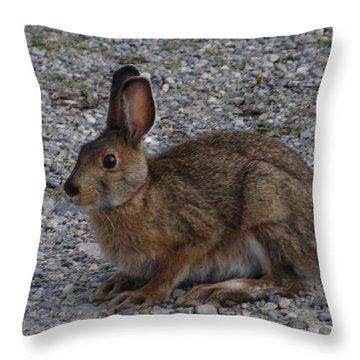 Snowshoe Hare-summer Throw Pillow by Bruce W Krucke