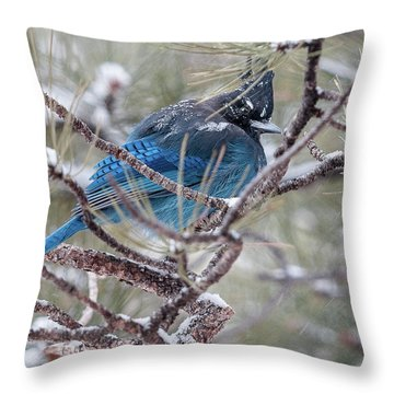Snowy Bluejay  Throw Pillow