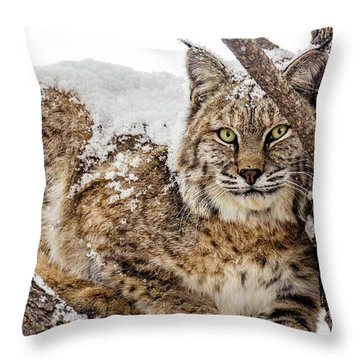 Snowy Bobcat Throw Pillow