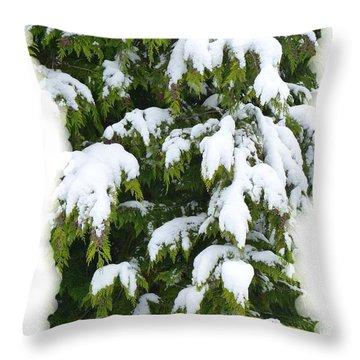 Throw Pillow featuring the photograph Snowy Cedar Boughs by Will Borden