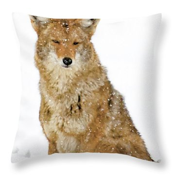 Snowy Coyote Throw Pillow