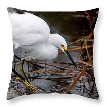 Snowy Egret Egretta Throw Pillow