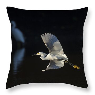 Snowy Egret In Flight In The Morning Light Throw Pillow