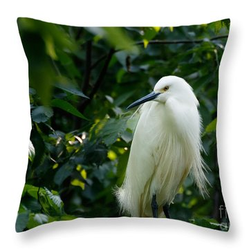 Snowy Egret In The Trees Throw Pillow