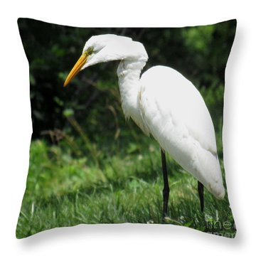 Snowy Egret Throw Pillow
