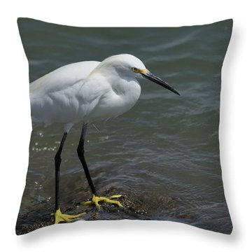 Snowy Egret On Rock Throw Pillow