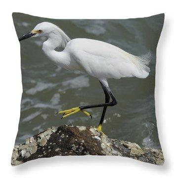 Snowy Egret Rock Walking Throw Pillow