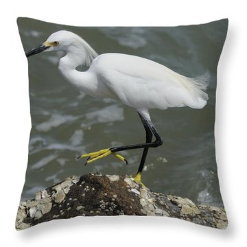 Snowy Egret Rock Walking Throw Pillow