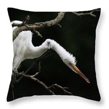 Snowy Egret Setauket New York Throw Pillow