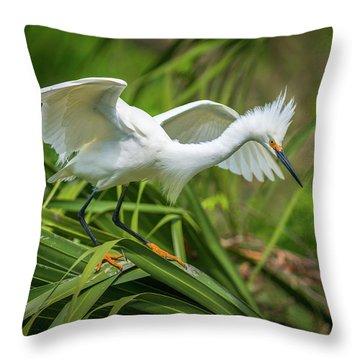 Snowy Egret St Augustine Florida Wildlife Nature Photography Throw Pillow