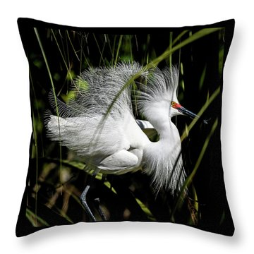 Throw Pillow featuring the photograph Snowy Egret by Steven Sparks
