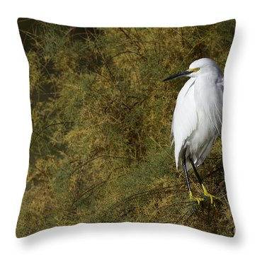 Snowy In Brush Throw Pillow