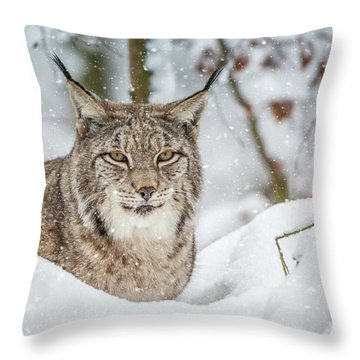 Snowy Lynx Throw Pillow